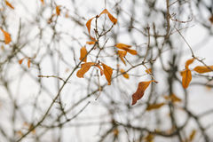Dry leaves on a winter cloudy backgrounds Royalty Free Stock Photos
