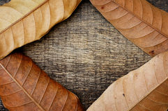 Dry leaves on wood texture. Make frame Royalty Free Stock Photos