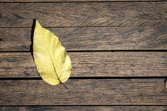 Dry leaves on the wooden floor. Stock Photography