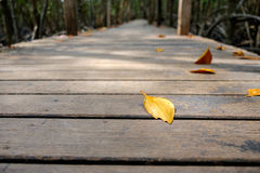 Dry leaves on wooden walkway bridge in mangrove forest Royalty Free Stock Images