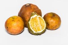 Dry lemon Stock Photography
