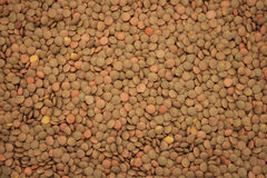 Dry lentil background Stock Photos