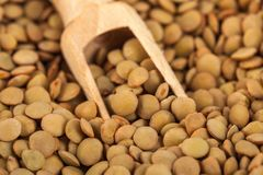 Dry lentils on wooden spoon, healthy food.  royalty free stock photo