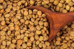 Dry lentils on wooden spoon, healthy food.  stock image