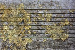 Dry lichen on an old bench. On the back of an old bench have increased lichens Royalty Free Stock Photography