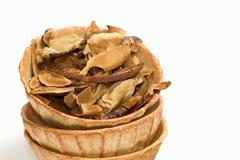 Dry Ling Zhi Mushroom, Reishi mushroom Stock Photo