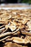 Dry Lingzhi mushroom Royalty Free Stock Image
