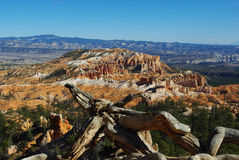Dry log over Bryce Canyon, Utah. Dry log over Bryce Canyon in Utah Royalty Free Stock Photos