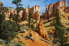 Dry logs, trees and fantastic rock torrets in Bryce Canyon National Park, Utah Royalty Free Stock Photos