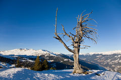 Dry lonely tree Stock Photography