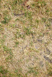 Dry long leaf grass Royalty Free Stock Photo
