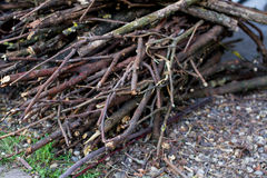 Dry loppings. Pile of wood, dry loppings Royalty Free Stock Images