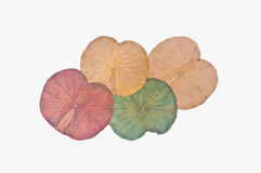 Dry lotus leaf Stock Photos