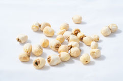 Dry lotus seed Stock Images