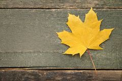 Free Dry Maple Leaf Royalty Free Stock Photos - 125452648