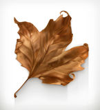 Dry maple leaf. Autumn vector icon Stock Photography