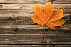 Dry maple leaf. On brown wooden table stock photo