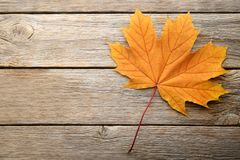 Dry maple leaf royalty free stock image