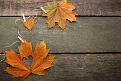Maple leaf with heart stock photo