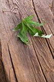Dry maple leaf on old wooden background Stock Photo