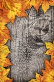 Dry Maple Leaves Border Backdrop On Old Knotted Wood Background Stock Photo