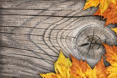Dry Maple Leaves Border Backdrop On Old Knotted Wood Background Stock Images