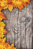 Dry Maple Leaves Border Backdrop On Old Knotted Wood Background Royalty Free Stock Photo