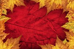 Dry Maple Leaves Border On Dark Red Background.  Stock Photography