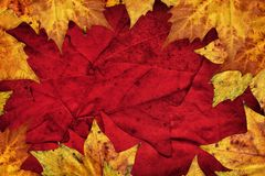 Dry Maple Leaves Border On Dark Red Background.  Royalty Free Stock Photos