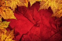 Dry Maple Leaves Border On Dark Red Background.  Stock Photo