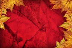 Dry Maple Leaves Border On Dark Red Background.  Stock Image