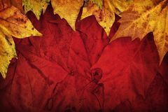 Dry Maple Leaves Border On Dark Red Background.  Royalty Free Stock Image
