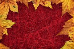 Dry Maple Leaves Border On Dark Red Wizened Cowhide Background Stock Photos