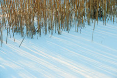 Dry marsh grass in snow drifts Royalty Free Stock Photography