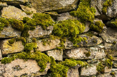Dry masonry stonewall with moss Royalty Free Stock Image