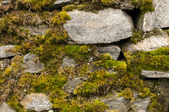 Dry masonry stonewall with moss Stock Photography