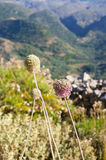 Dry meadow for background usage Royalty Free Stock Photography