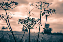 Dry meadow flowers Royalty Free Stock Images