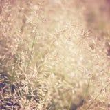 Dry meadow flowers Stock Photo