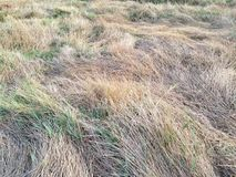 Dry meadow. A grass field texture which is effects from the Royalty Free Stock Photo