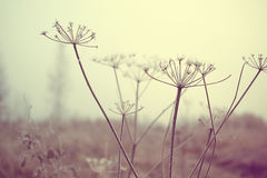 Free Dry Meadow Plants Royalty Free Stock Image - 48653196