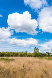 Dry meadow in summer arid landscape blue cloudy sky. Dry meadow in summer arid landscape blue cloud Royalty Free Stock Photos