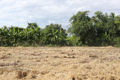 Dry meadows of tropical forest in Thailand. royalty free stock image