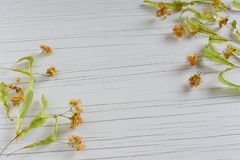 Dry Medicinal Herb Linden on table stock image