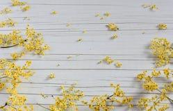 Dry Medicinal Herb Sambucus on table royalty free stock images