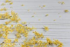 Dry Medicinal Herb Sambucus on table royalty free stock photos