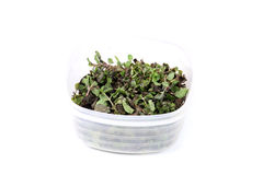 Dry mint leaves Royalty Free Stock Photo