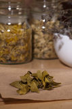 Dry mistletoe leaves Stock Photography