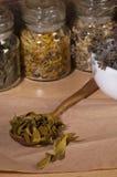 Dry mistletoe leaves Stock Images