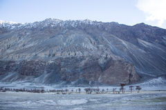 Dry mountain trees in valley. Stock Image